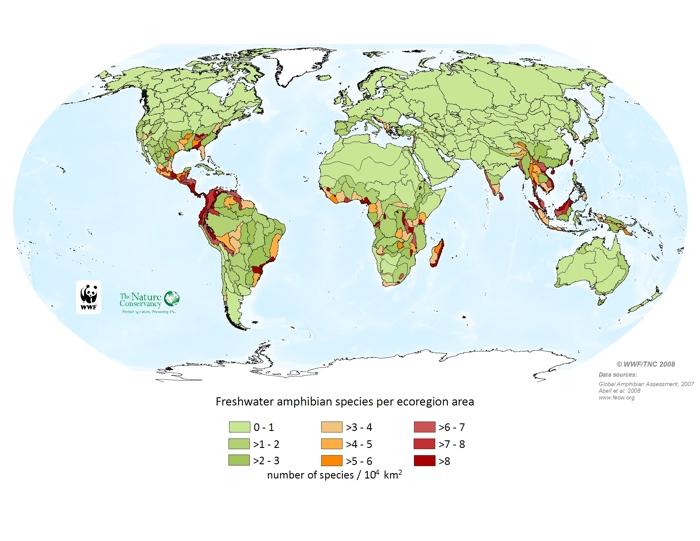 Freshwater amphibian species per ecoregion area